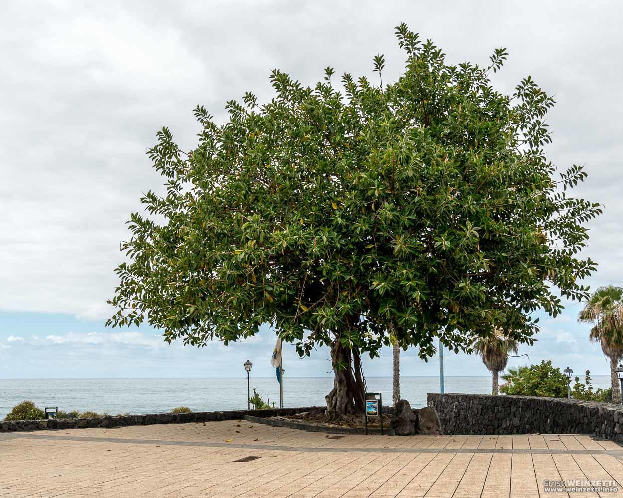 Ein Baum am Strand.