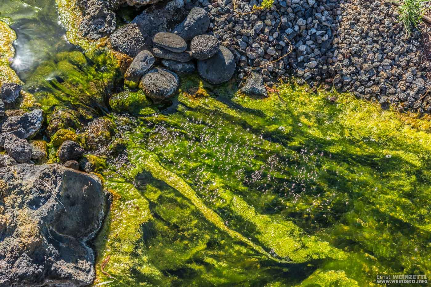 Ein künstlicher Wasserlauf gluckert durch die nachgebildete Schlucht. Mit Europäischem Aal.