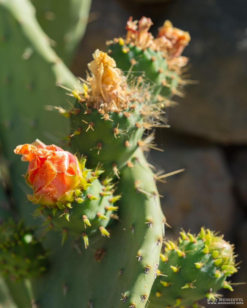 Verschiedene Pflanzen blühen im Nachhaltigen Garten.