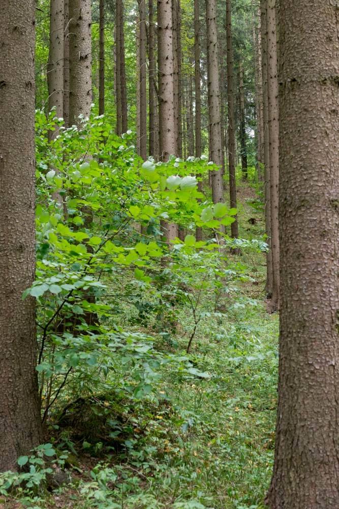 Wald im Kamptal