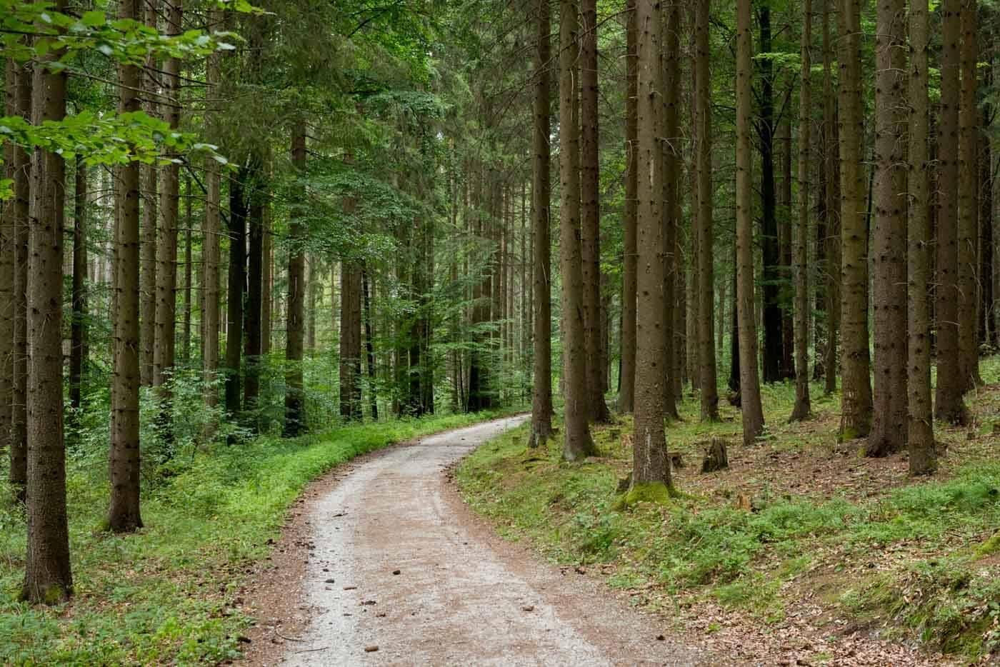 Waldweg im Kamptal