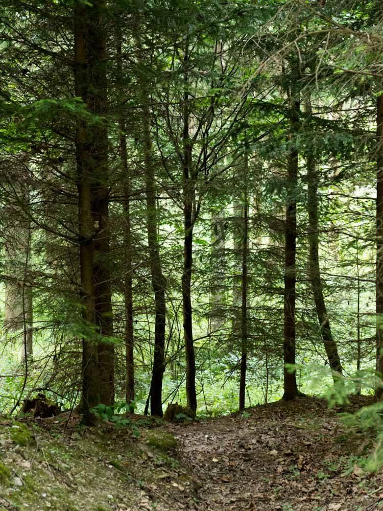 Wald am Kamp