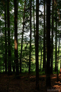 Urlaub am Wiesenhof
