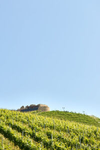 Die Burg liegt heute inmitten großer Weingärten.
