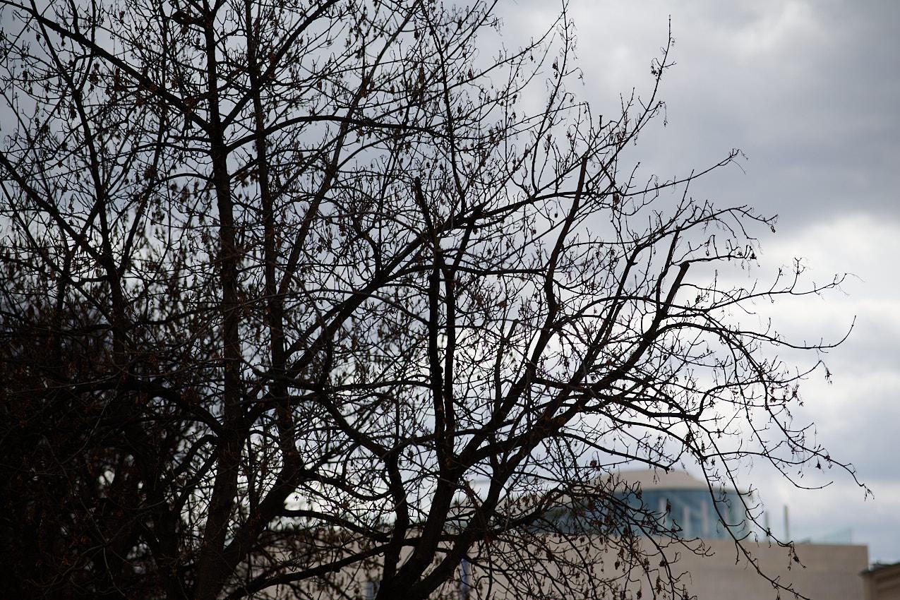 Zweige gegen den Himmel - das ist Brutalität.